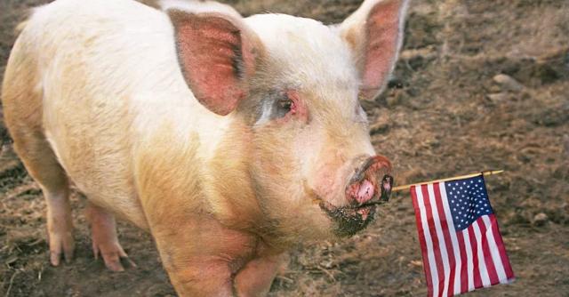 США подкидывает свинью России